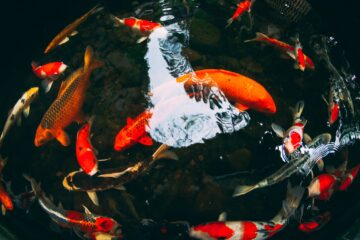 wodne feng shui irmina wrona konsultacje astrologiczne ustawienia hellingera